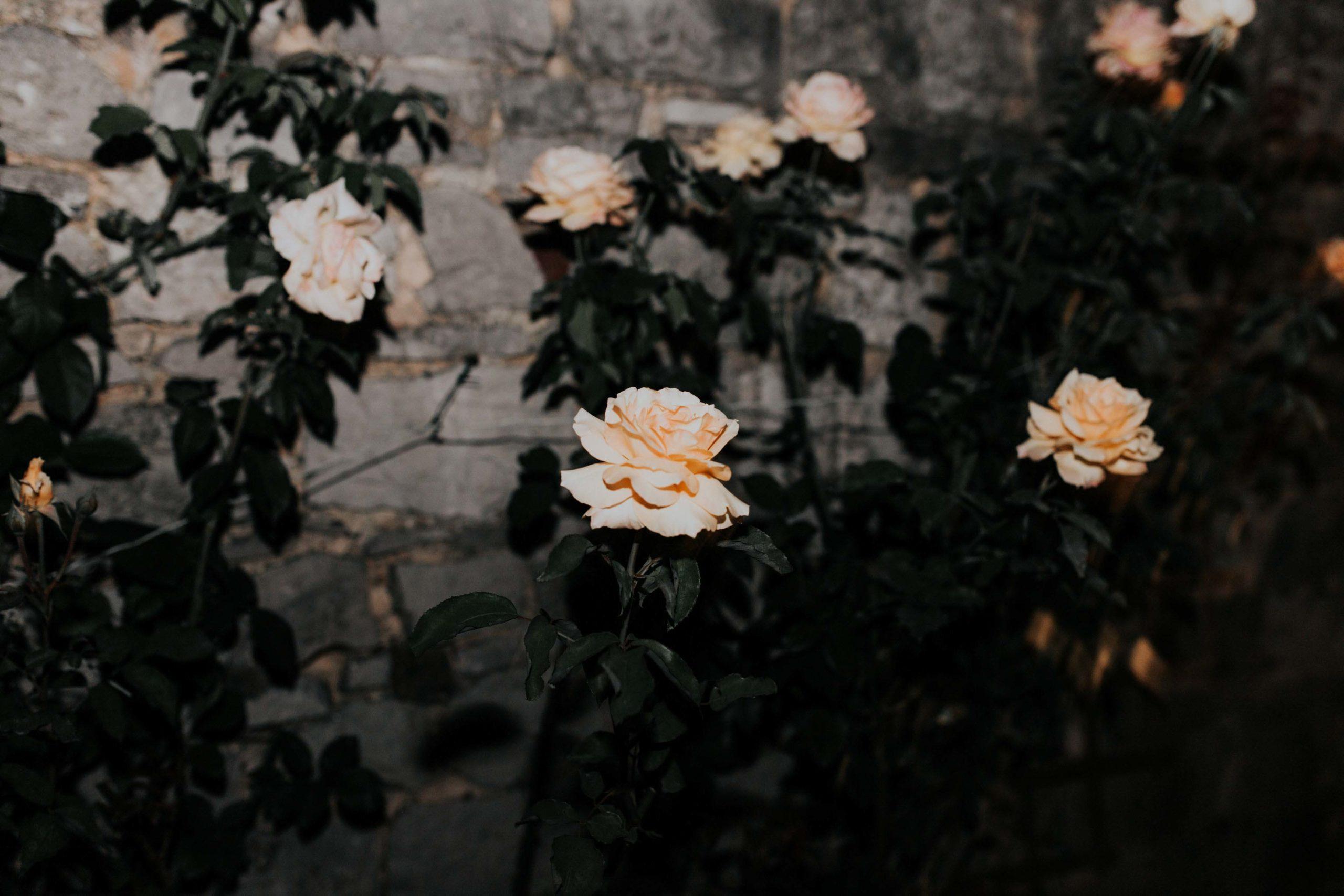 SFOREVER-MARIAGE-PHOTOGRAPHE-BELGIQUE-678-1-scaled-1